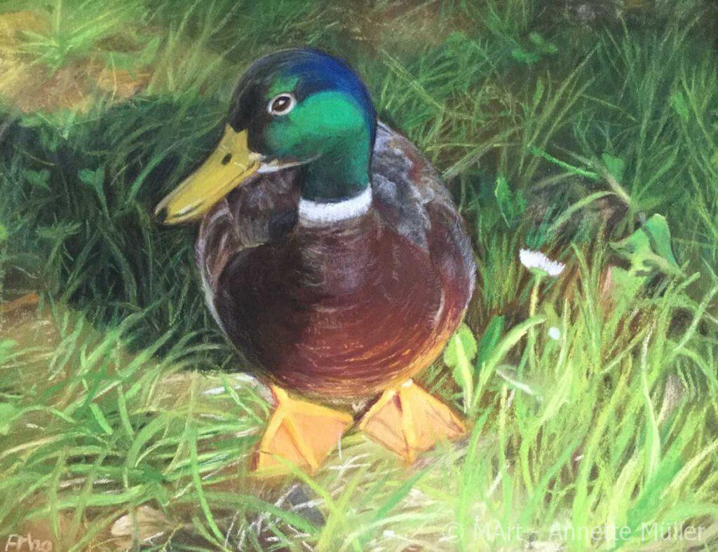 Pastellbild Hungry male duck – Hungriger Erpel