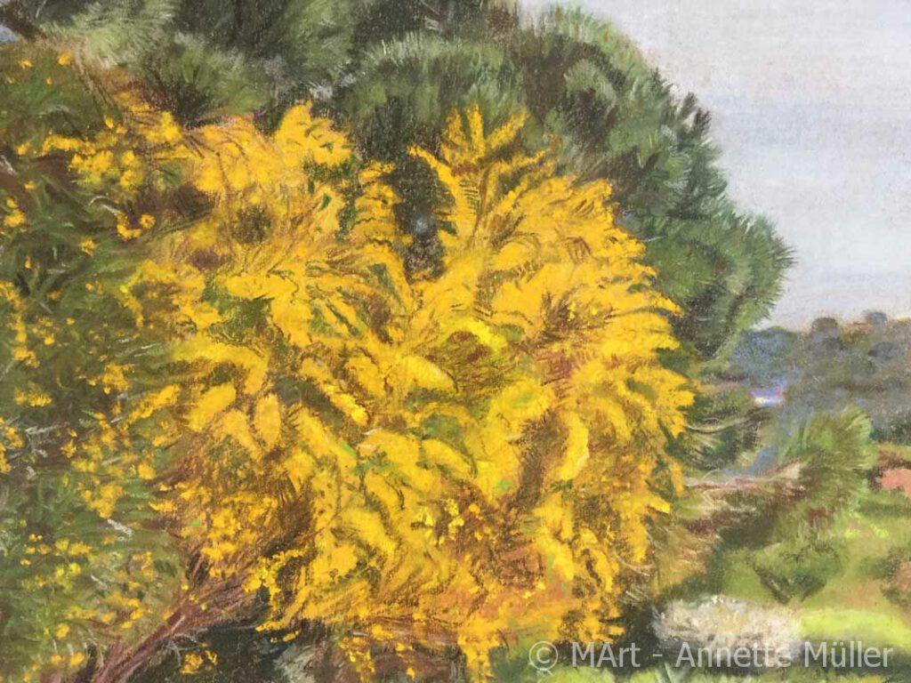 Pastellbild Mimosa in bloom Mimosenbluete