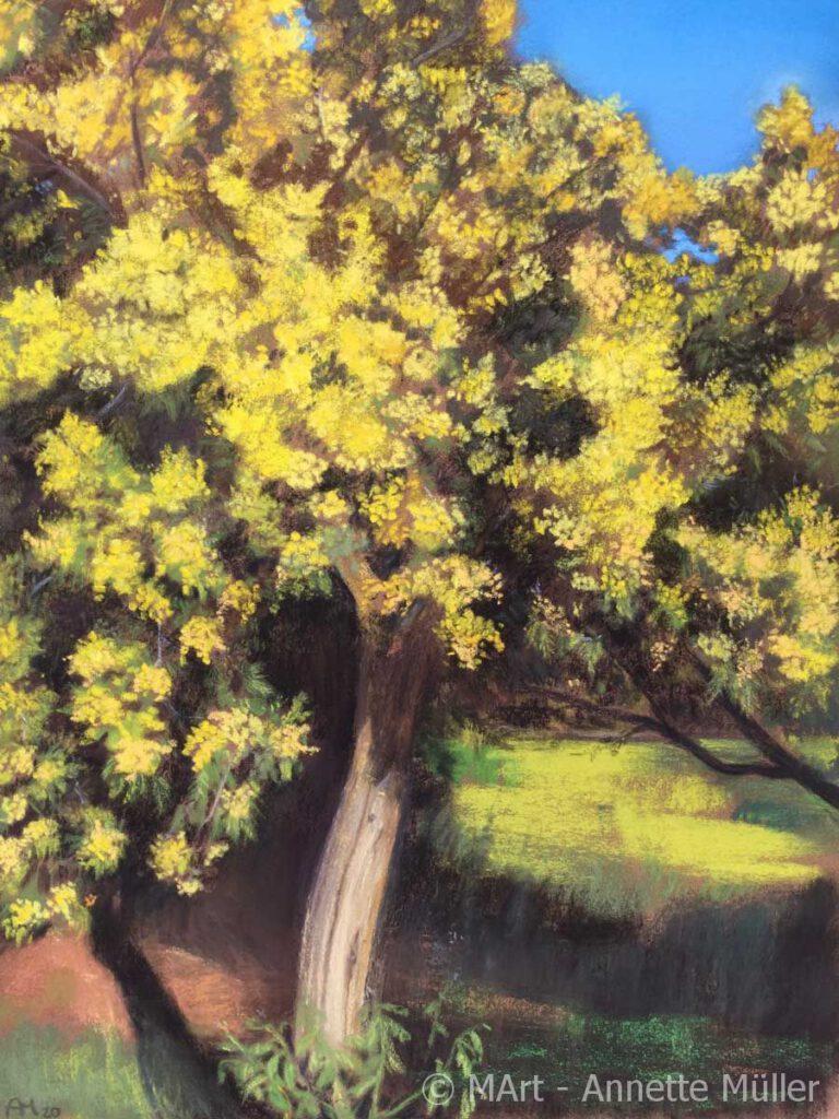 Pastellbild Yellow blossom in Gigaro – Gelbe Pracht in Gigaro